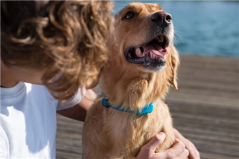 10 Best Tracking Devices for Dogs in 2018